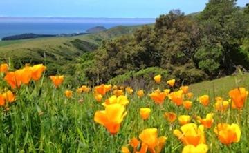 Big Sur Wilderness Experience
