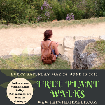 Free Plant Walks with The Wild Temple