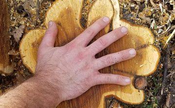 Soul Good: Managing Buckthorn as Spiritual Practice