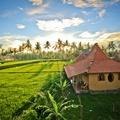 Dragonfly Village, Ubud Bali