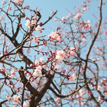 South Korea Meditation Teachings and Retreats