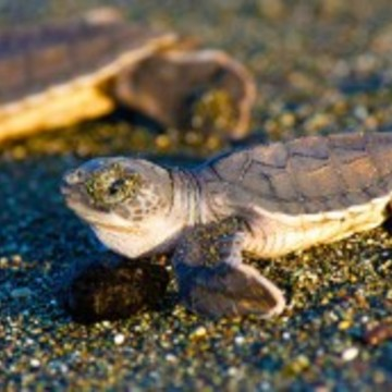 SAVE THE SEA TURTLES YOGA RETREAT