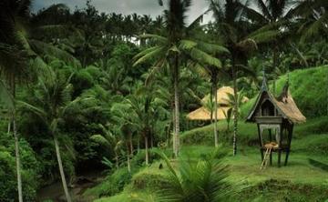 Jungle Spirit Yoga Retreat BALI