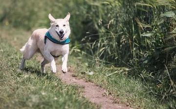 """Zuke's"" September Walk Your Dog Hike"