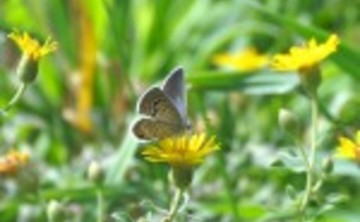 12th Annual Pueblo Mountain Park Butterfly Count