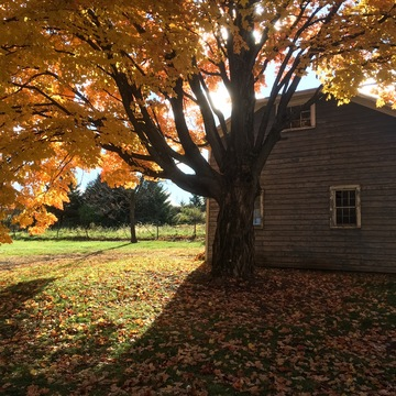 """Fall 2018 """"The Grounding"""" with Erika Shannon"""