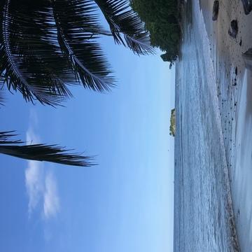 200 Hour Vinyasa and Restorative Yoga Teacher Training Costa Rica