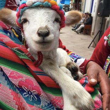 Wonderful Peru Yoga Adventure
