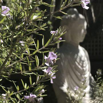 Foundations of Buddhism & Meditation