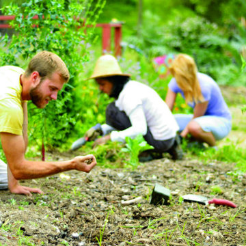Permaculture Service Day