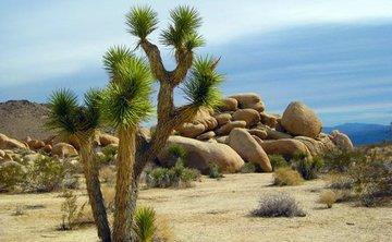 4 Day Desert Reset: Singles Only for Valentine's Day - Joshua Tree, California