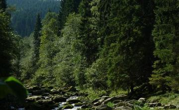 Shamanic healing retreat Czech Rep (ongoing)