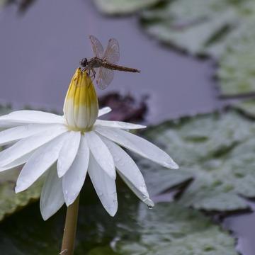 Lotus Gatekeepers Retreat