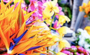 Fall Kado Retreat: The Way of Flowers