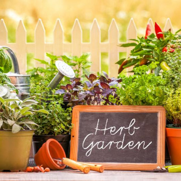 Herbology: Harvest to Hand