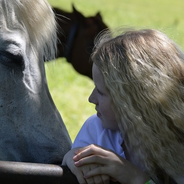 Connect with Horses Mindfulness Immersion