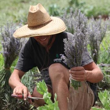 Aromatherapy and Distillation: Harvest to Hand Series