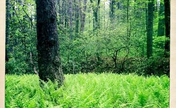 True Nature Retreat at Elohee