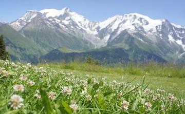Gather Yoga's Switzerland Tour Retreat