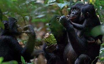 Ape Living ~ Liberate Your Inner Great Ape!