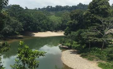 10-day Ayahuasca retreat