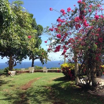 Oneness Wellness Farm ~ Portland ~ Jamaica