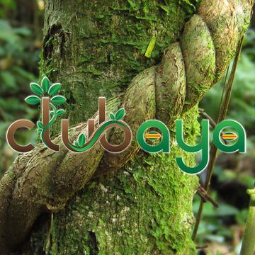 ClubAYA - Ayahuasca Healing Center - Panama