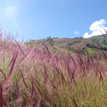 VOLUNTEER – Eco-village Projects – Quillabamba