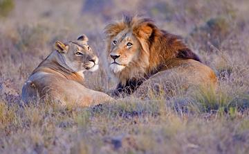 Africa • Exotic Yoga Safari