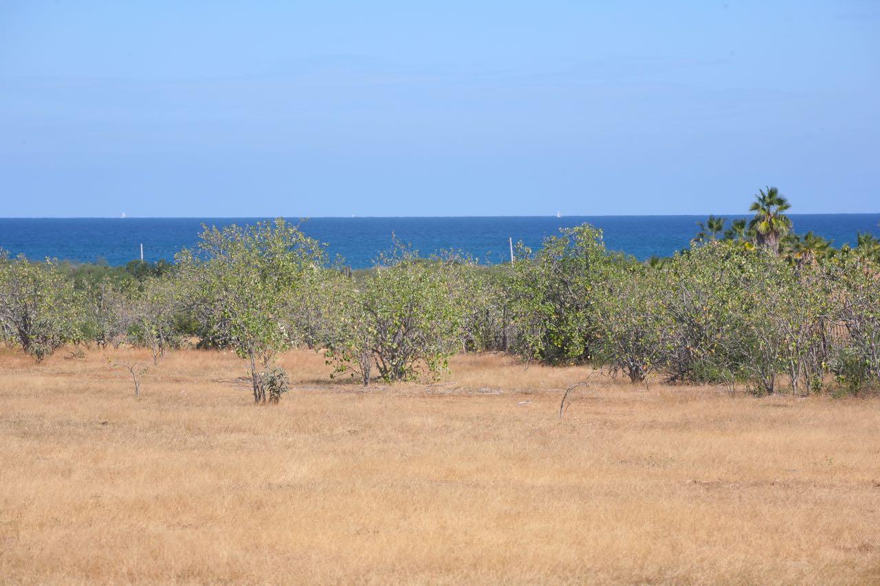 Buena Vista  Leonero Lot, East Cape