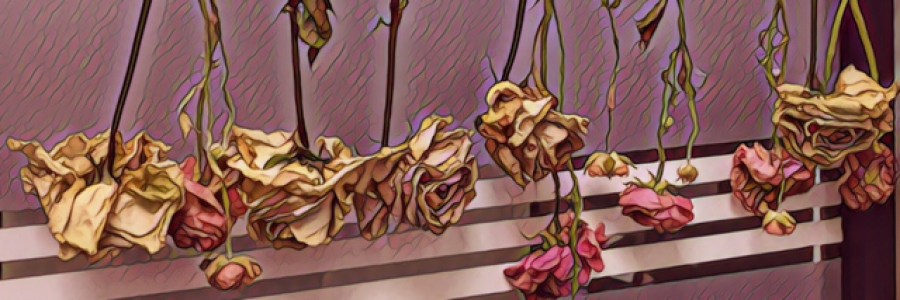 Cover image for post Roses, by ZarinaDara