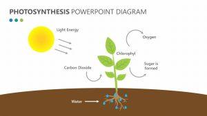 Photosynthesis PowerPoint Diagram