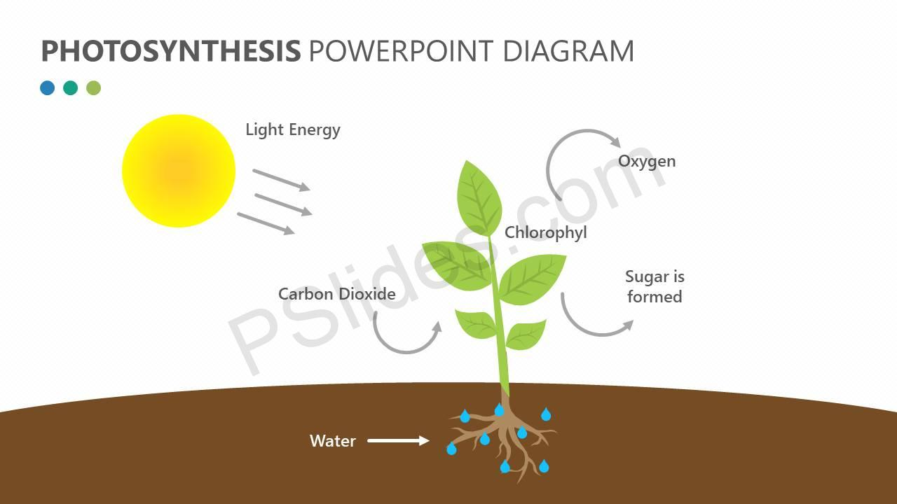 Photosynthesis powerpoint diagram pslides photosynthesis powerpoint diagram slide1 ccuart Gallery