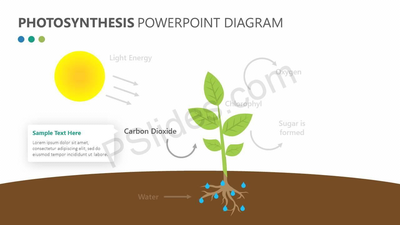 Photosynthesis powerpoint diagram pslides photosynthesis powerpoint diagram slide2 ccuart Gallery