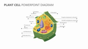 Plant Cell PowerPoint Diagram