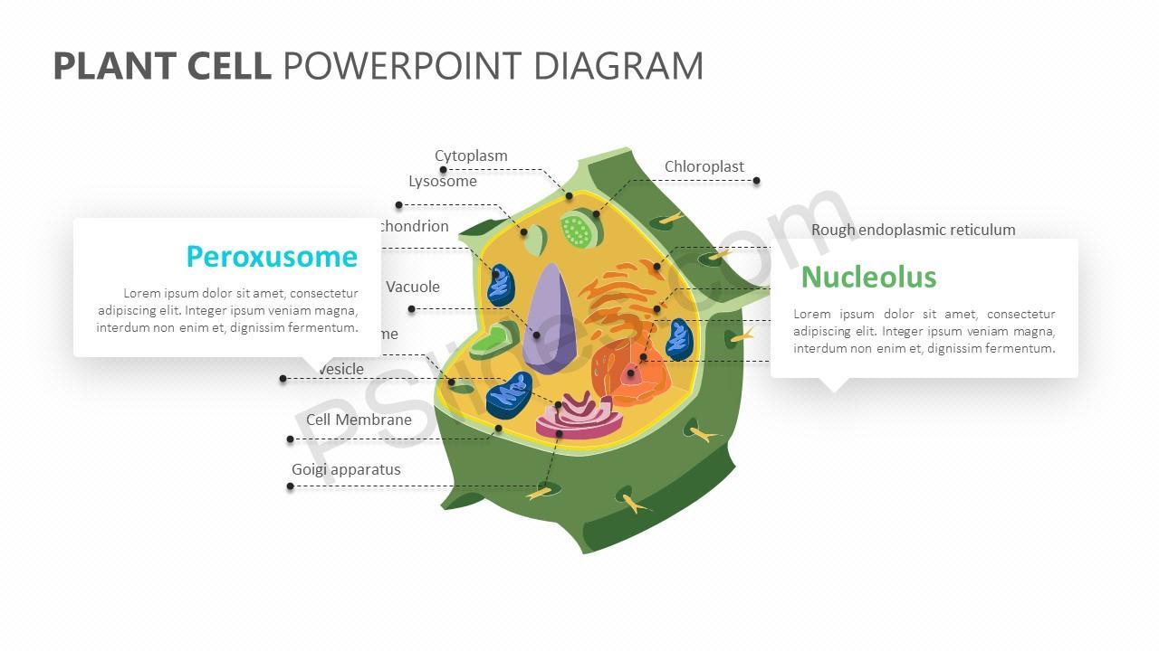Plant Cell PowerPoint Diagram - Pslides