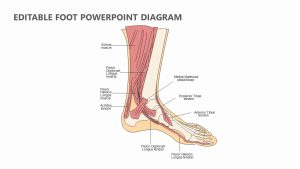 Editable Foot PowerPoint Diagram