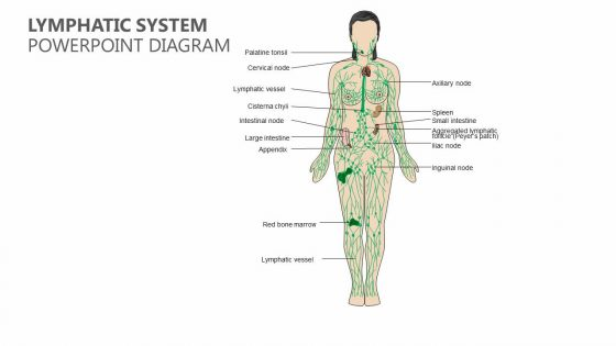 Lymphatic System PowerPoint Diagram - Pslides