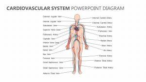 Cardiovascular System PowerPoint Diagram