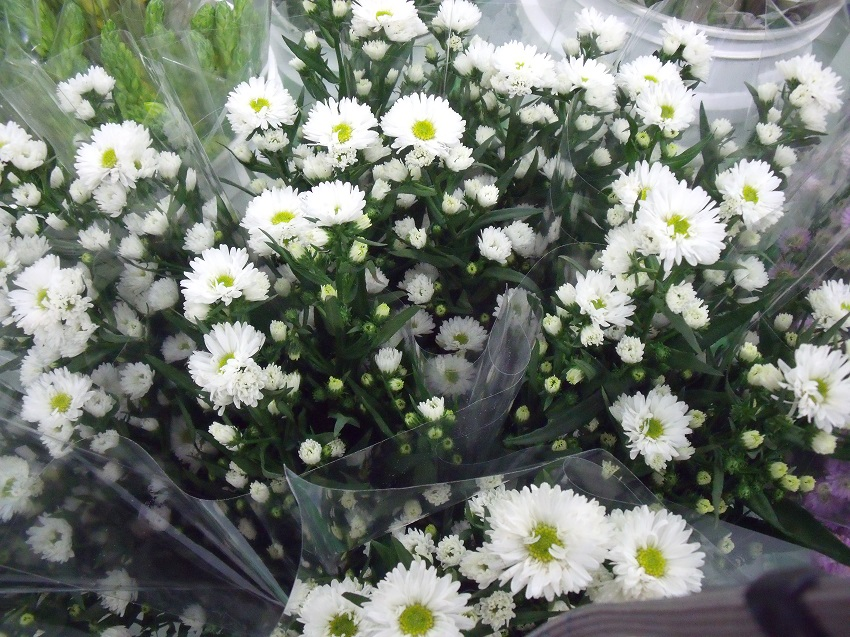 https://s3-us-west-2.amazonaws.com/public.prod.atlanticantigua.ca/images/FlowerFolder/Fillers_Aster_Monte_Casino_White.JPG