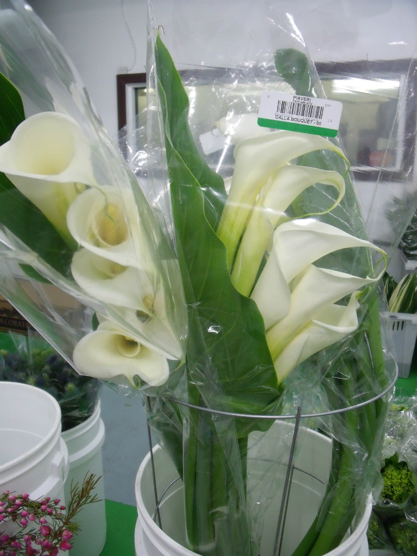 Calla Large White Open Cut Flowers