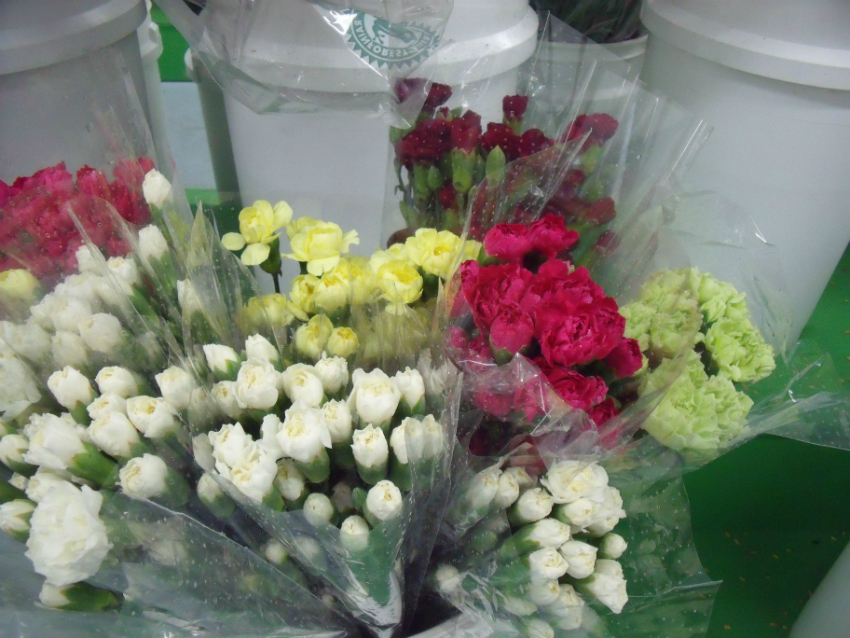 https://s3-us-west-2.amazonaws.com/public.prod.atlanticantigua.ca/images/FlowerFolder/Flowers_Carnations_Mini.JPG