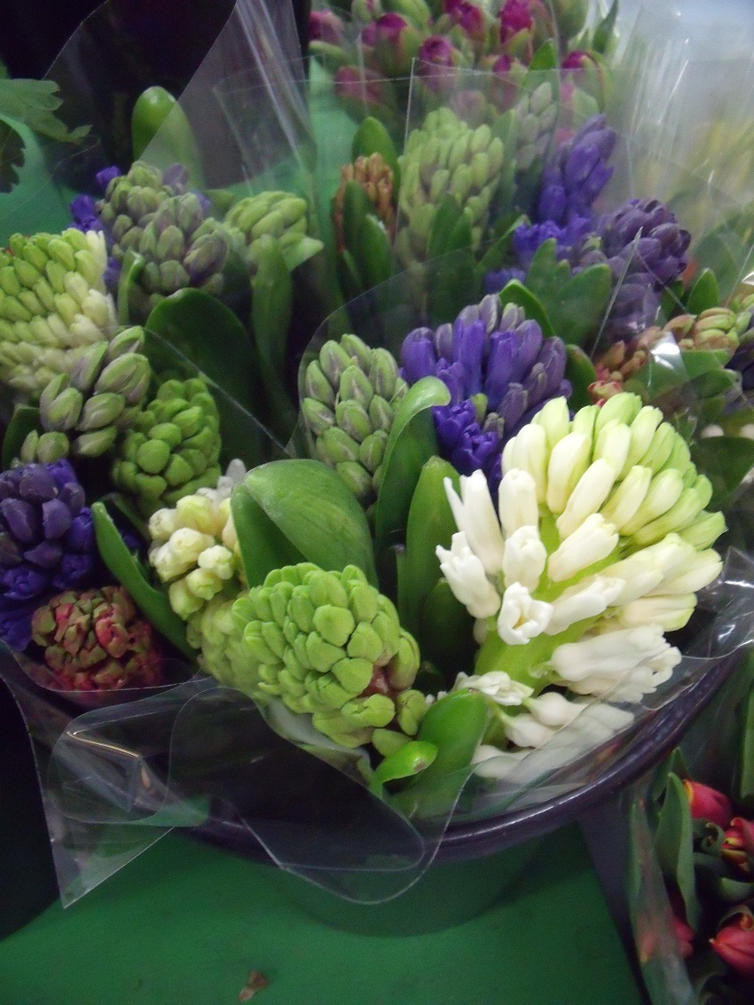 https://s3-us-west-2.amazonaws.com/public.prod.atlanticantigua.ca/images/FlowerFolder/Flowers_Hyacinth.JPG