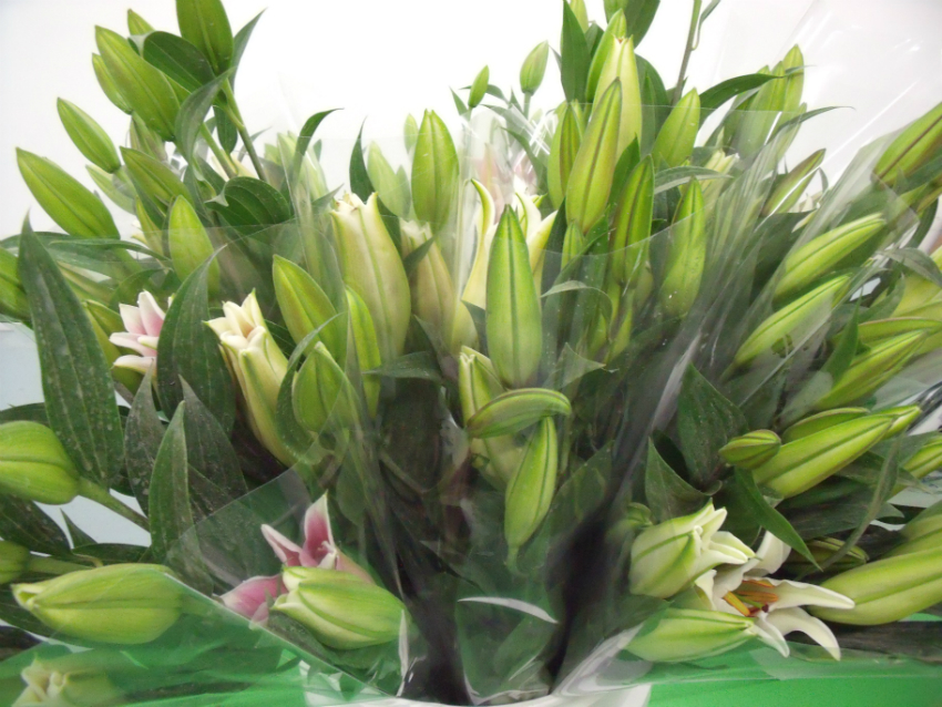 Lilies Oriental Pink White Flowers