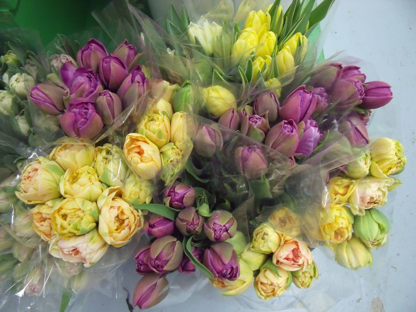 https://s3-us-west-2.amazonaws.com/public.prod.atlanticantigua.ca/images/FlowerFolder/Flowers_Tulips_Double.JPG