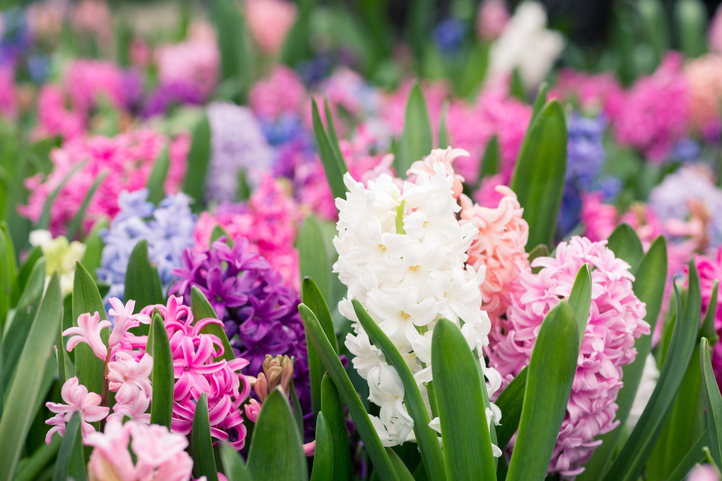 Stock Up on Beautiful Blooms in Time for Mother's Day