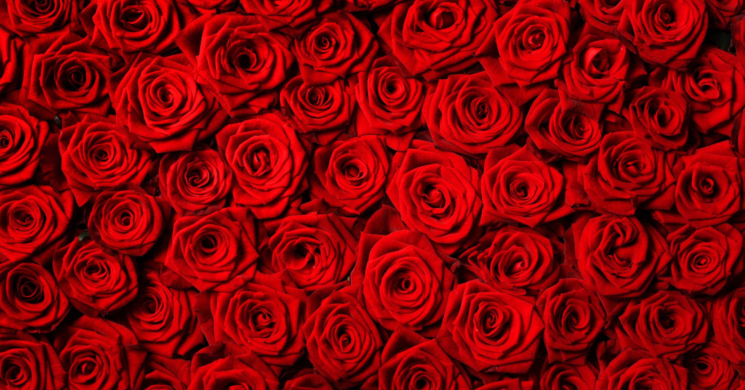 Valentine's Day: Have You Ordered the Flowers You Will Need?