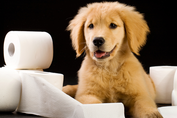 PupBox | Toys, treats, and training customized for your puppy.
