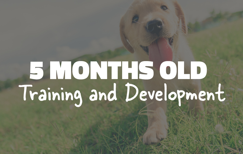 5 Month Old Puppy & 5 Month Puppy Training Guide | PupBox