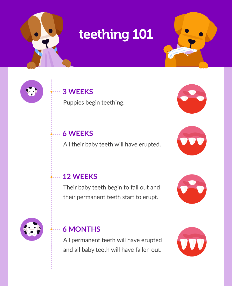 safe-and-humane-ways-to-teach-your-puppy-how-to-stop-biting-001